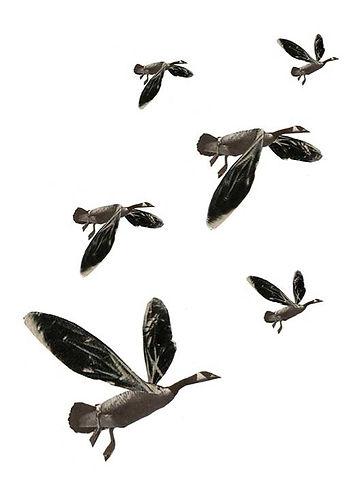 oiseaux_edited.jpg