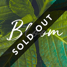 bloom_square_sold out.jpg