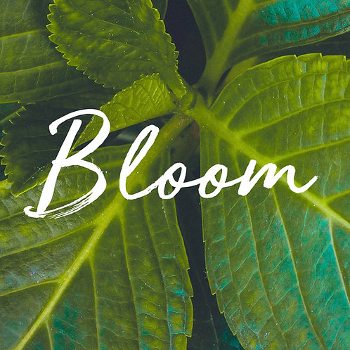 Bloom Program + 1 Private Session