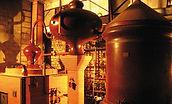 chais viticole familiale cognac bossuet hébergement route du cognac