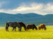 Mongolia-72_GF.jpg