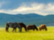 rando cheval avec des enfants en Mongolie