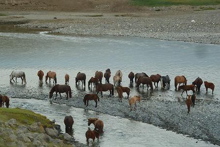 agence de voyage à cheval en mongolie,chevaucher les chevaux mongols,agence franco mongole, nomades mongols,yourtes,vie traditionnelle mongole,mongolie,randonnée équestre mongolie,randonnée à cheval en mongolie,agence sur mesure en mongolie,mongolie