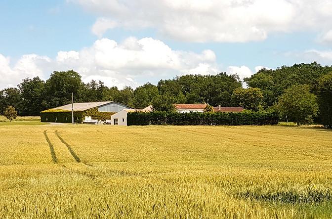 notre maison entourée de bois et de champs