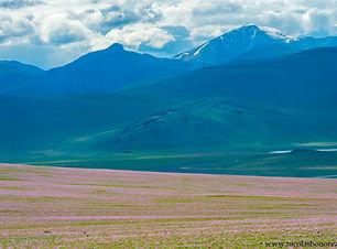 Mongolia-220_GF.jpg