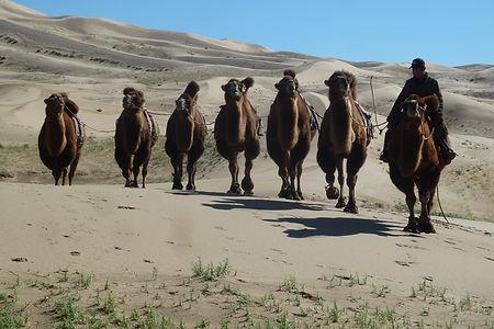 agence de voyage à cheval,mongolie,agence voyage mongolie,agence mongole francophone,chevaux mongols,naadam,festival des aigliers altaï khazakhs,festival des glaces de Khuvsgul,festival des 1000 chameaux au Gobi,nouvel an mongol Tsagaan Sar,désert gobi