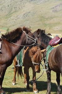 agence de voyage a cheval,randonnée à cheval, khuvsgul,cheval en mongolie,randonnée équestre mongolie,lac baïkal le lac khuvsgul,moron,chevaux sauvages de mongolie,tsaatans éleveurs de reines en mongolie,oulan bator,monastères mongols,mongolie à cheval