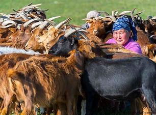 vivre en famille nomade en mongolie agen