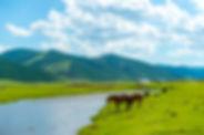 courts sejours en mongolie