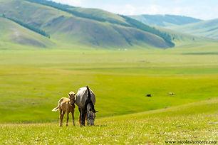 voyagez à cheval en Mongolie, randonnée cheval Mongolie