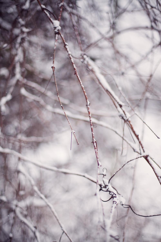 Séance photo hivernale