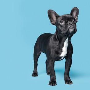 AVSAB Position Statement On Puppy Socialization