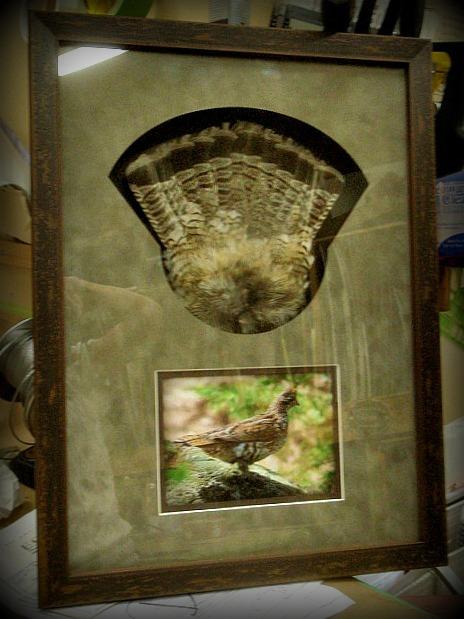 bird feathers2.jpg