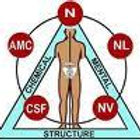 Kinesiology Assessment and Balance (Structural, Foods/Supplements, Emotional