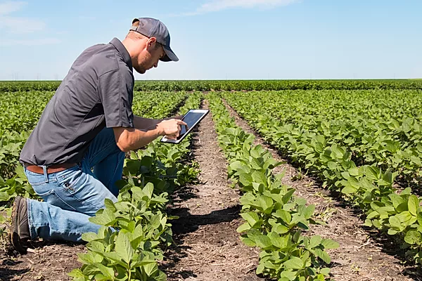 Agronomist Using a Tablet in an Agricult