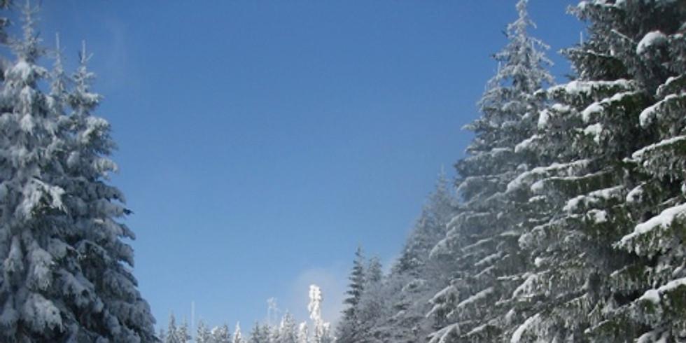 Vereinsmeisterschaften Ski Langlauf