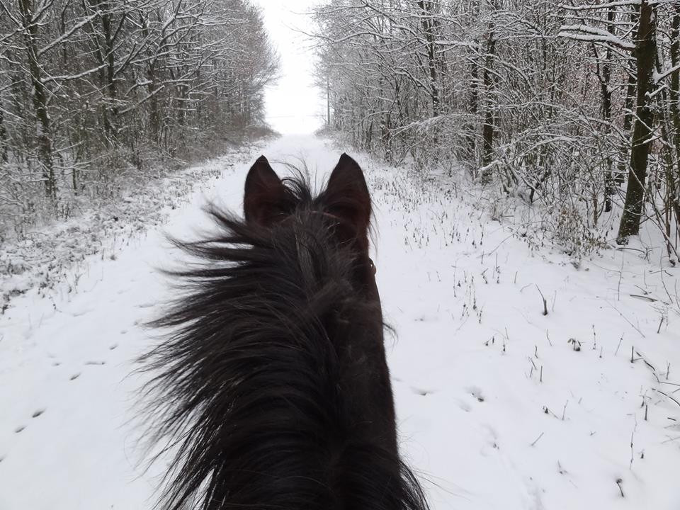 Snowy trail from horseback