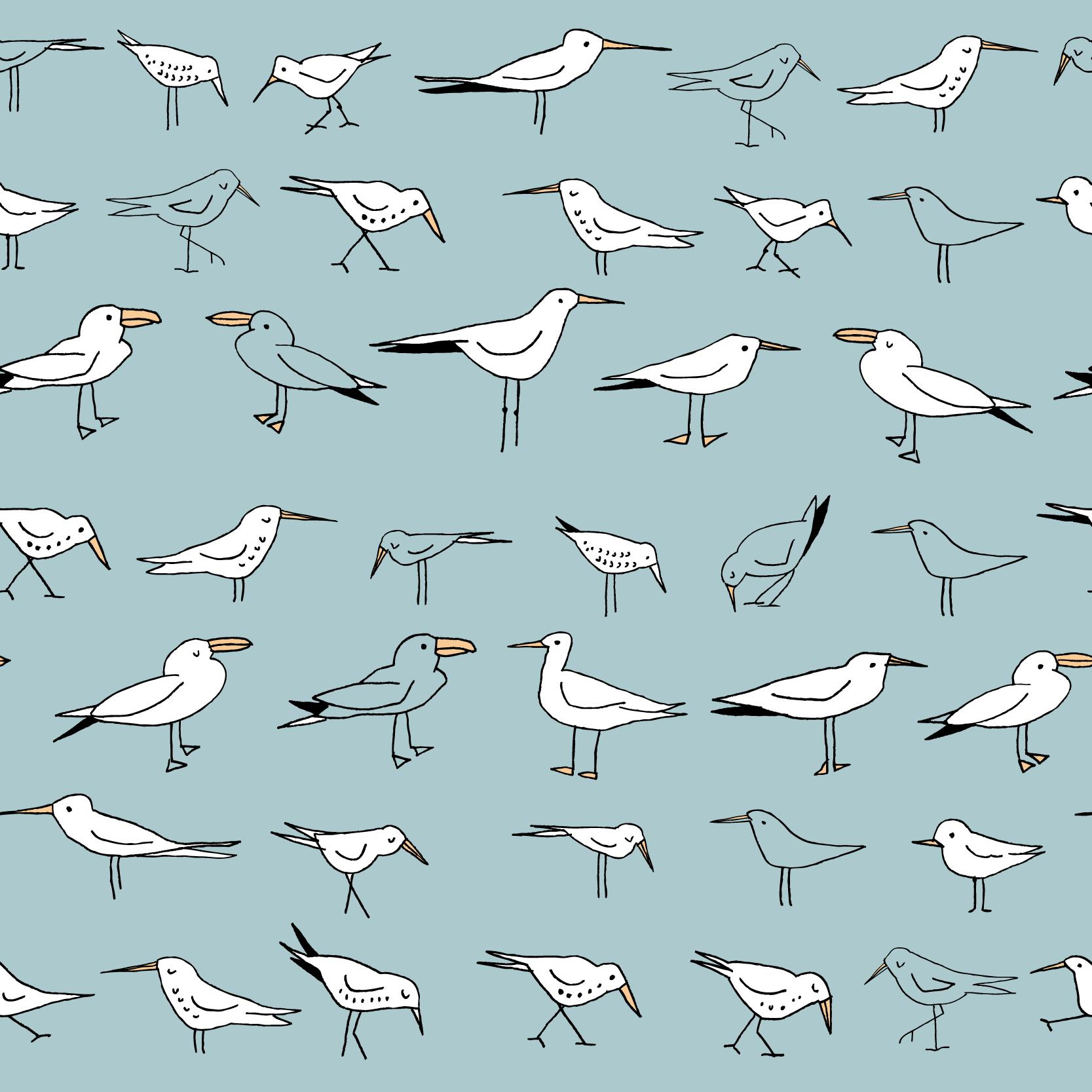 seabirds.png
