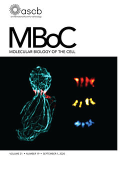 mboc.2020.31.issue-19.cover.jpg