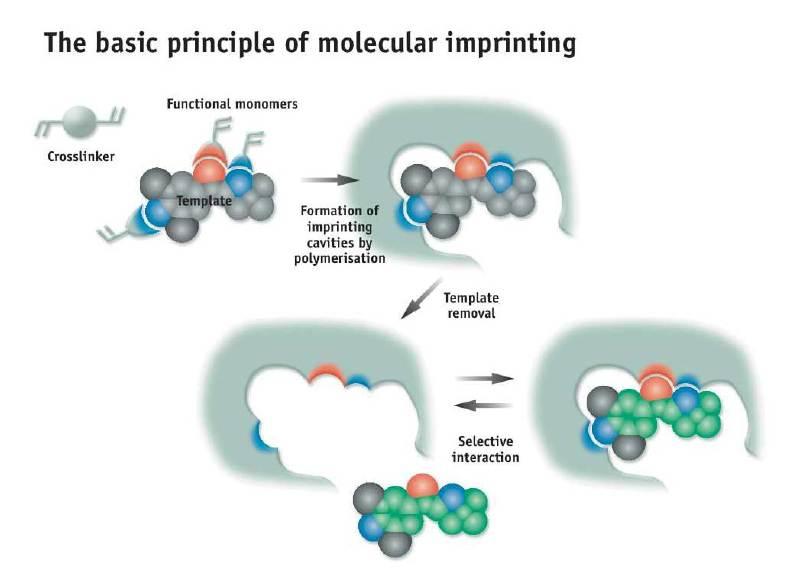 molecular-imprinting-principle_800x800