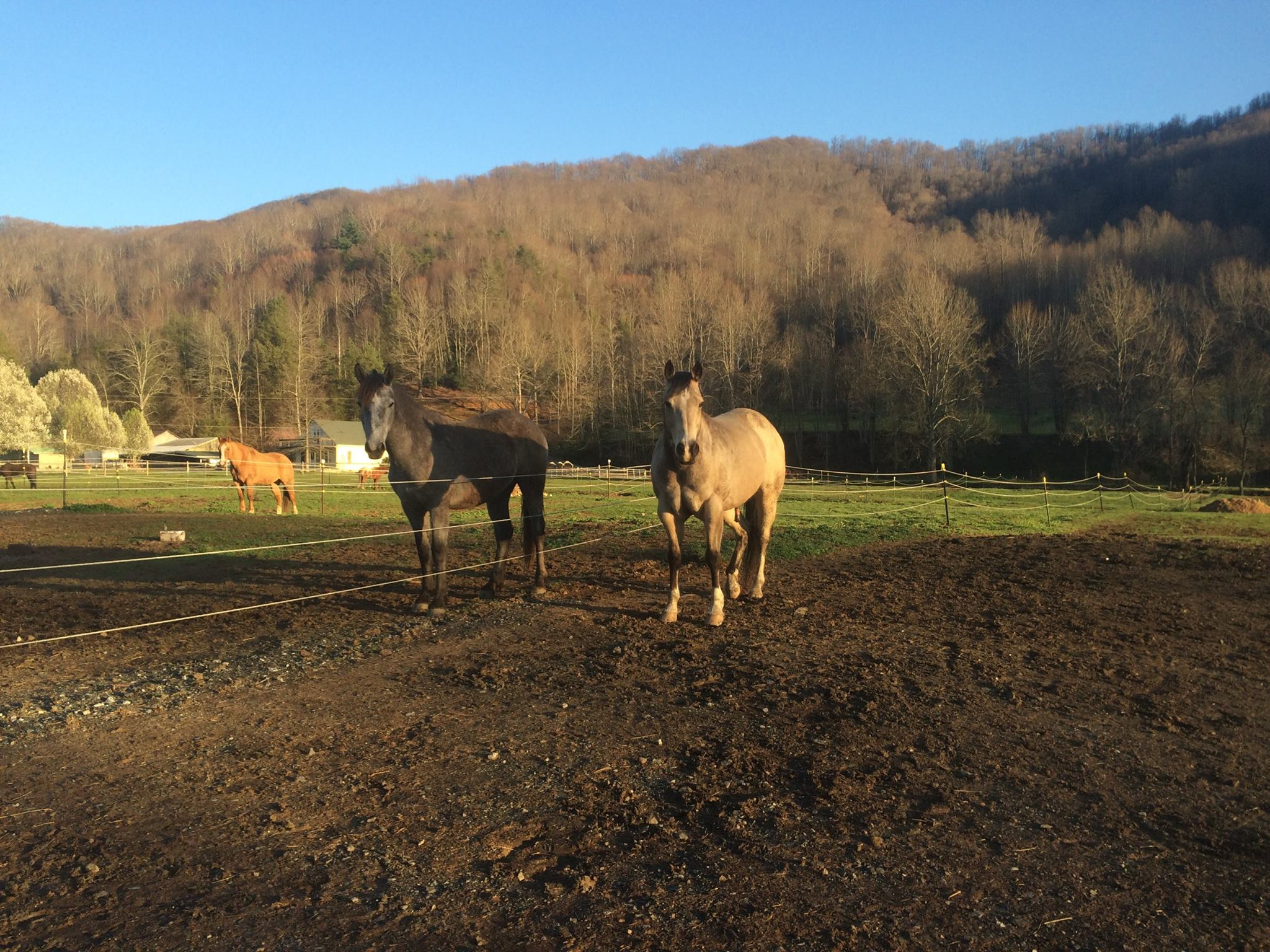 Horses in paddocks