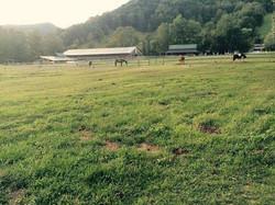 Happy grazing horses