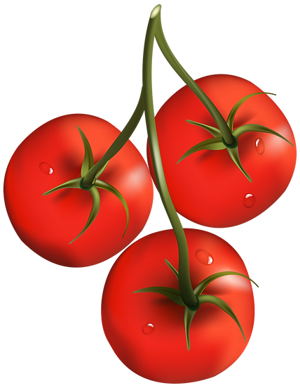 Tomato_Branch_PNG_Clipart-481.png