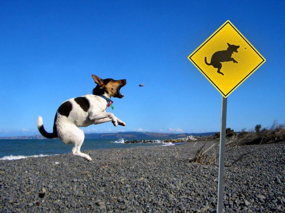 Funny-Dog-Acting-Sign-Board-Situations-I
