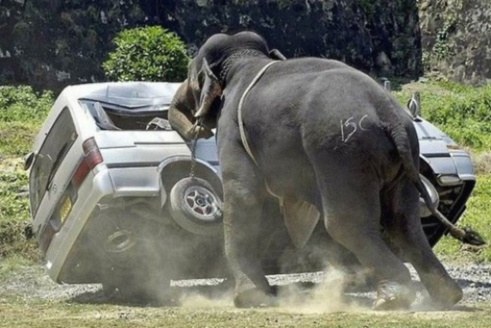 Elephant-Attack-On-Car-Funny-Situations-