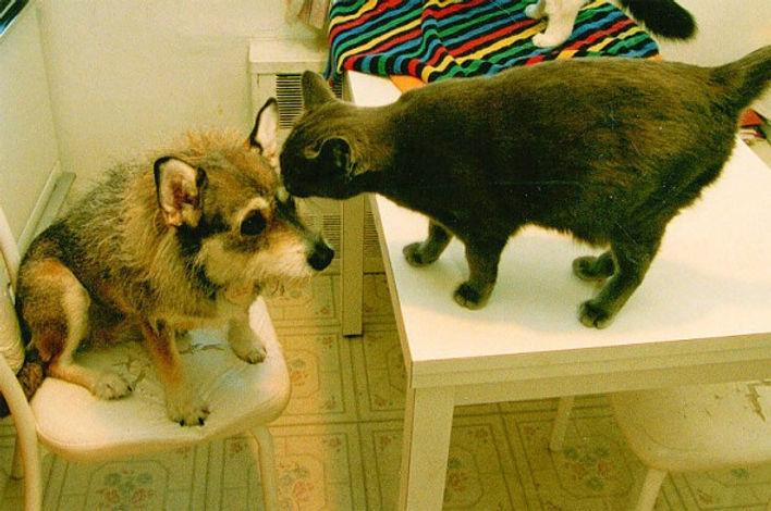 1.3.14-Ginny-the-Feral-Cat-Saving-Dog6-5