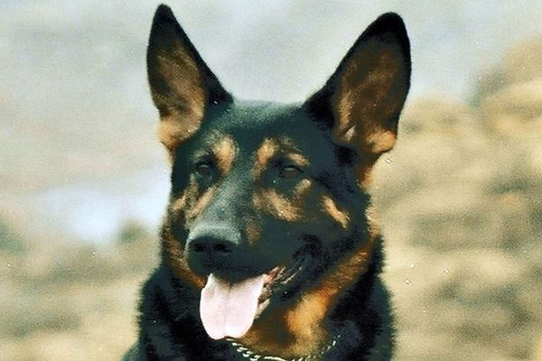 Trakr-the-Search-and-Rescue-dog.jpg