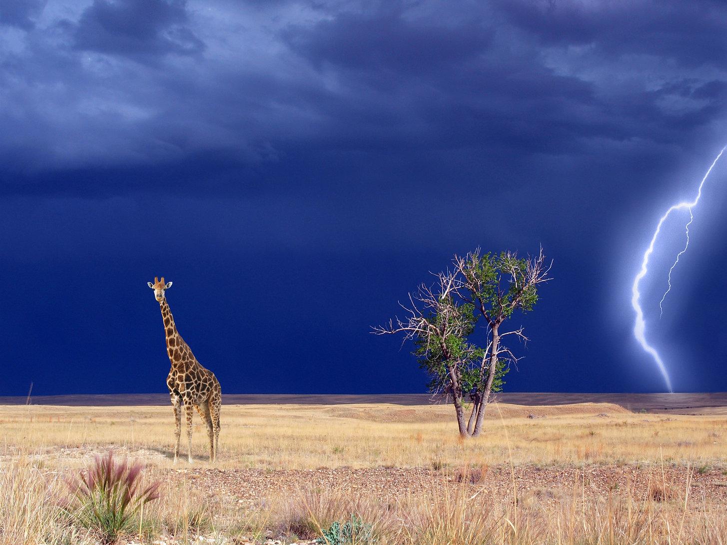 giraffe-in-the-landscape-woth-lightning-