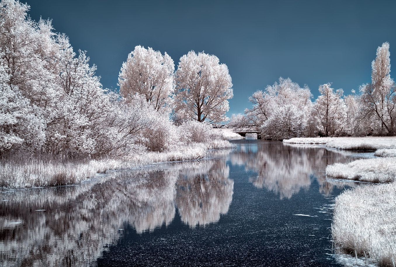 ice-lake-frozen-trees-4k-g5.jpg
