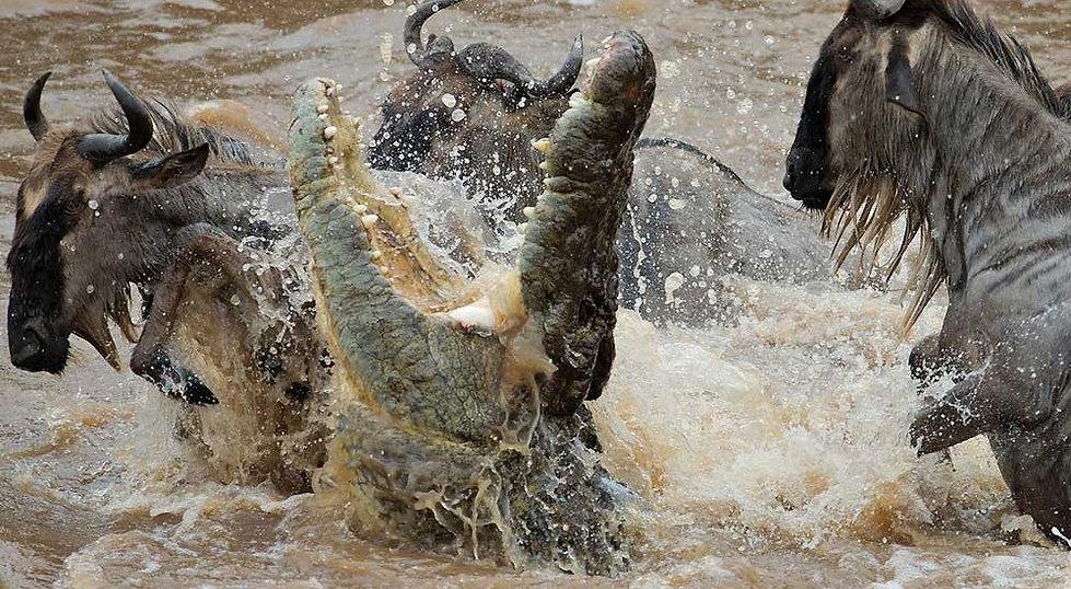 Kenya-Great-Migration-1000x550.jpg