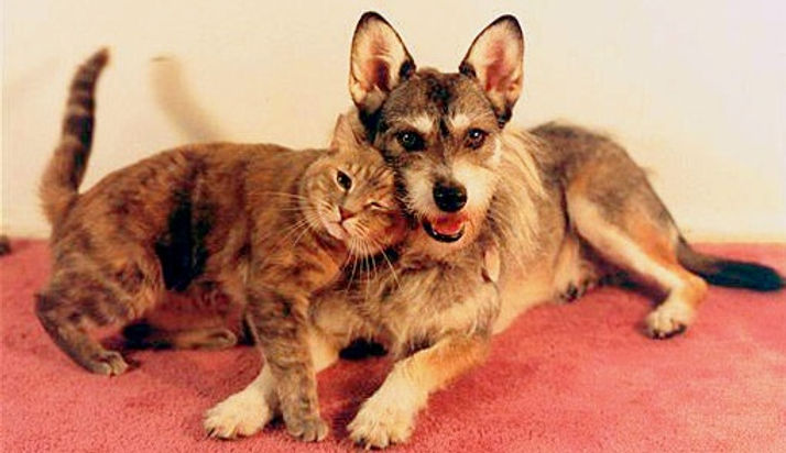 1.3.14-Ginny-the-Feral-Cat-Saving-Dog9.j