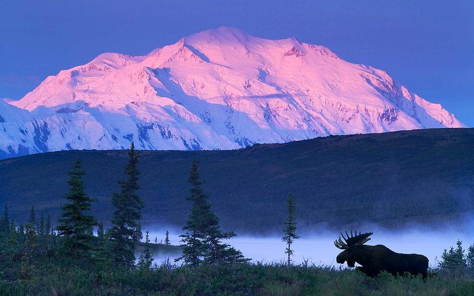 mckinley-moose-denali-alaska-100DENALI01
