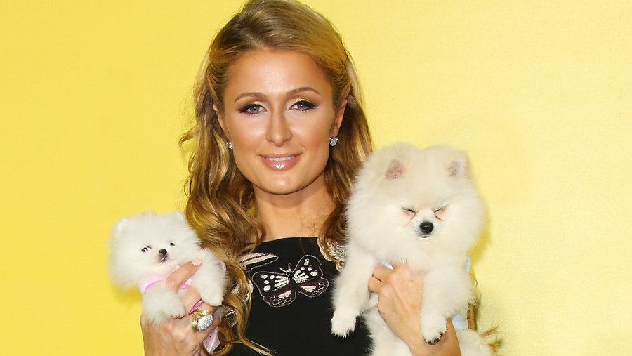 paris-hilton-with-dogs-today-tease-17083