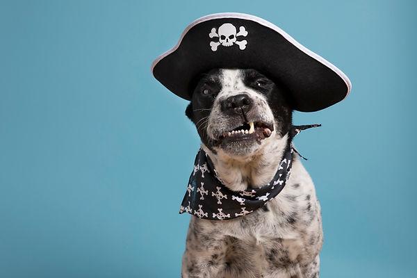 pirate__higres.jpg