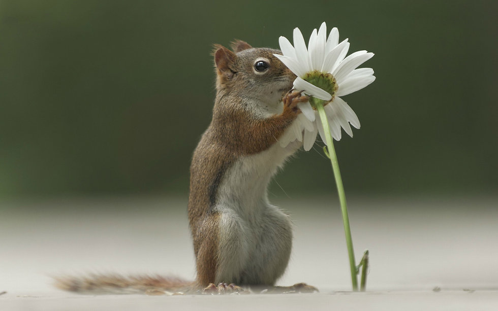funny_squirrel_and_flower_sniffing_1920x