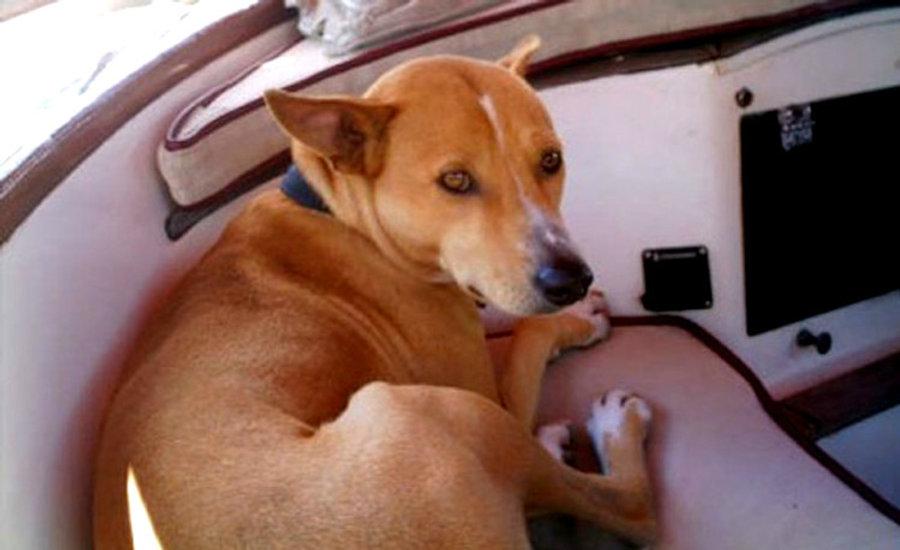 Kankuntu-the-Brave-Hunting-Dog.jpg