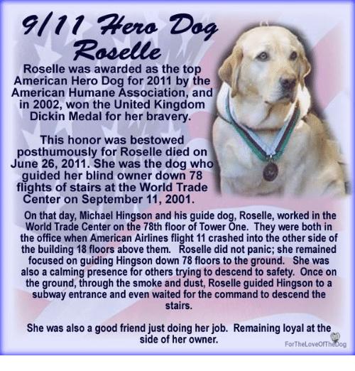 9111-hero-dog-roselle-roselle-was-awarde