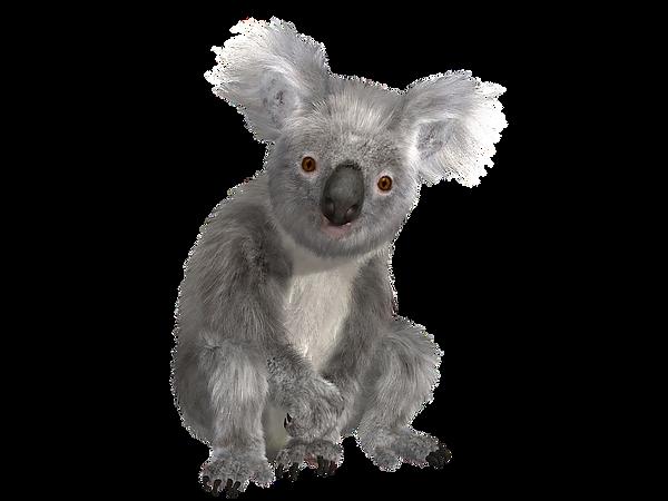 koala-1313374_960_720.png