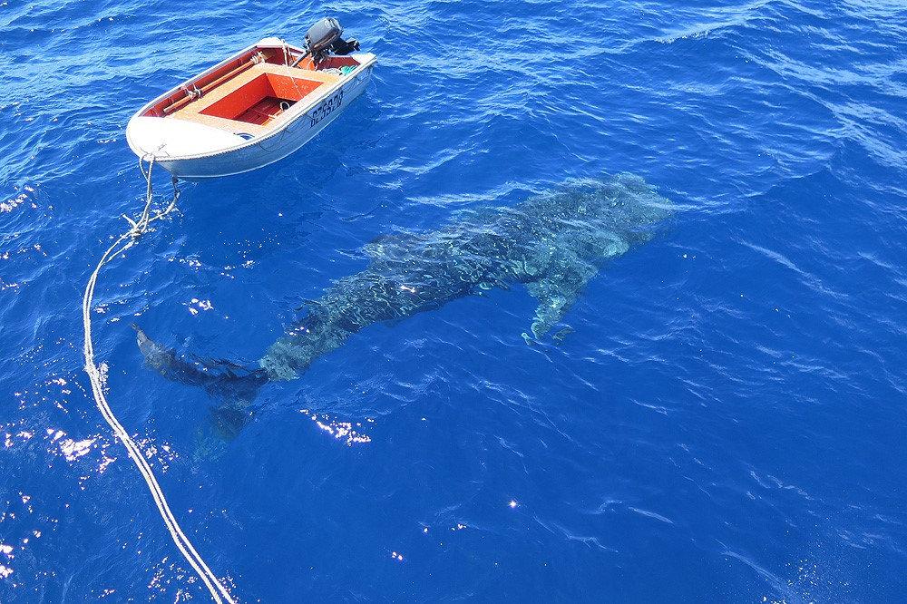 Whaleshark-GBR5.jpg