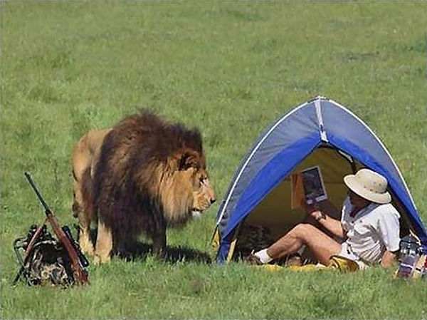 Funny-Situations-Lion-Looking-Man-Image.