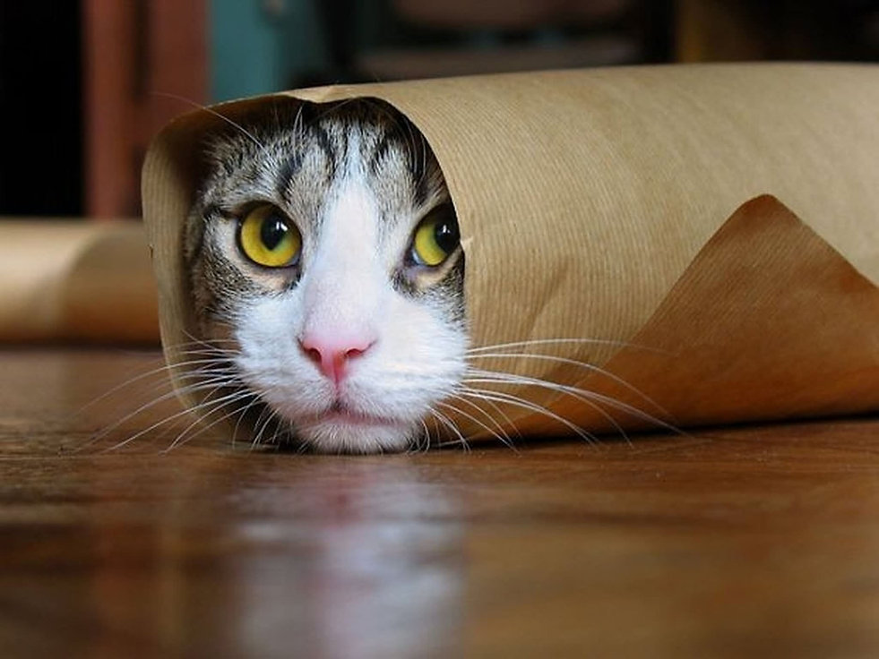 Funny-Rolled-Cat-Picture.jpg