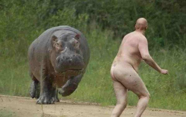 hippo-vs-man.jpeg