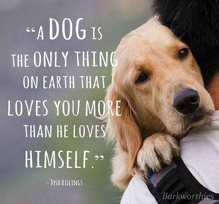 -love-my-dog-puppy-love.jpg