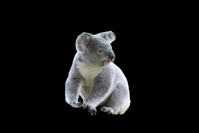 purepng.com-cute-koalakoalasittinggrey-k