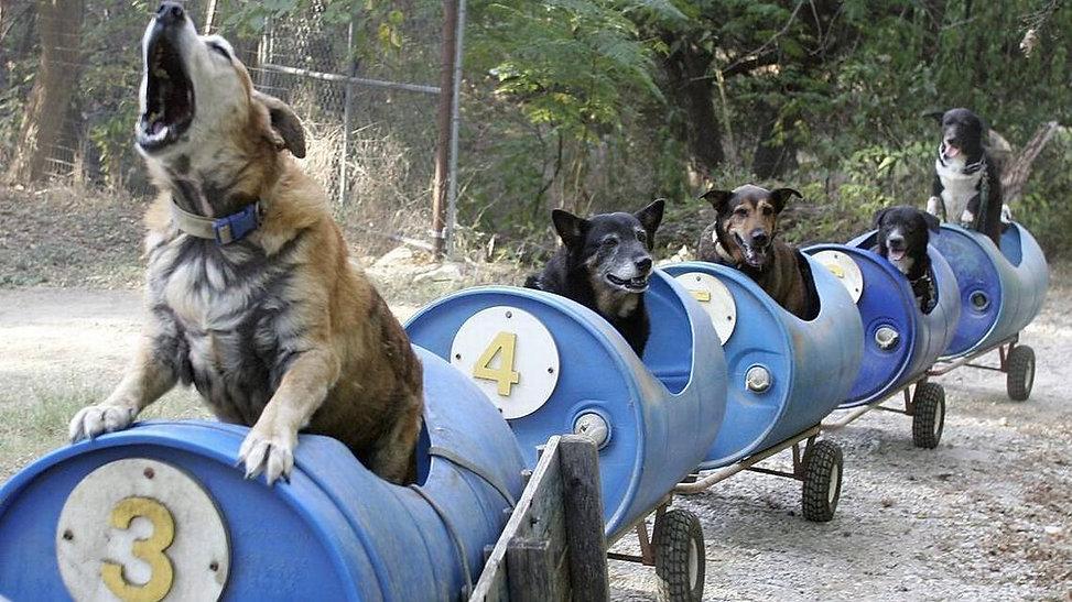 Train man stray dogs 13.jpg
