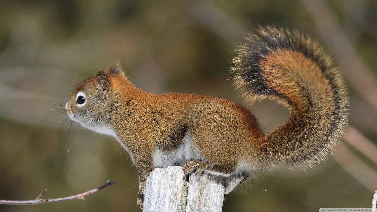 1395879-squirrel.jpg